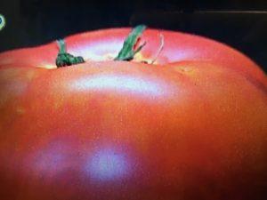 ガッテン トマト