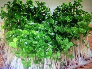 林修の今でしょ講座!最強の秋野菜ベスト6&栄養を逃さないレシピ