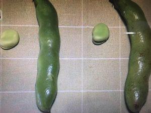 【ガッテン】しっとり・ホクホクそら豆のベストな茹で方・皮ごとレシピ