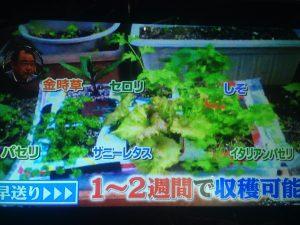 藤田先生直伝!簡単家庭菜園 ベスト5【世界一受けたい授業】