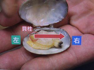 【あさイチ】あさり特集~5分&王道砂抜き・保存方法・簡単レシピ