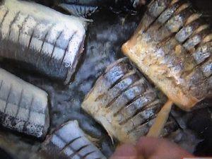 きょうの料理ビギナーズ さんまの照り焼き
