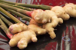 ヒルナンデス 家政婦マコさんの新生姜 レシピ。万能ダレでアレンジ。